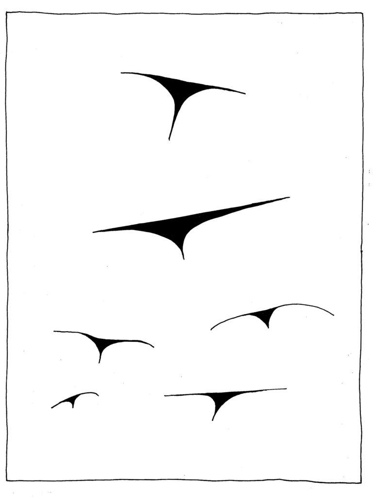 124 - vlucht rokvogels - flight skirtbirds
