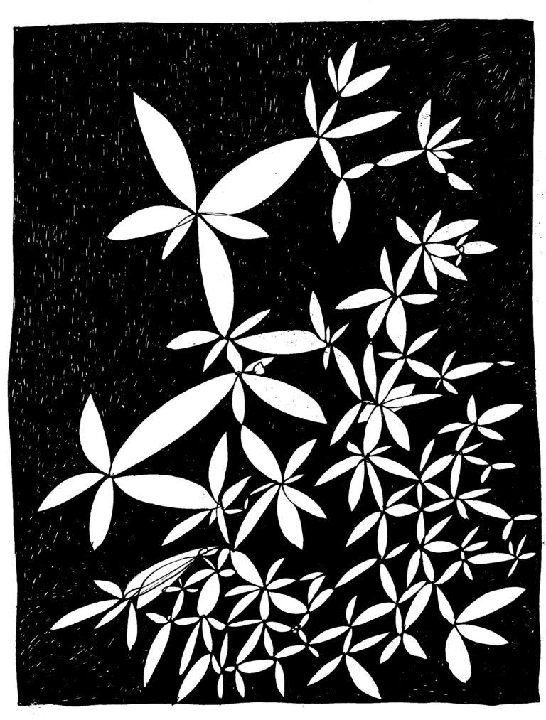 240 - fractaal gebladerte